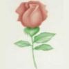 40-WM028 Трафарет для аэрографа «Роза»